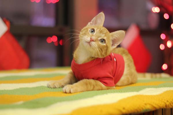 14095584379594 stockings8 Kitten Born With Backward Legs. These Images will Definitely Make You Emotional!