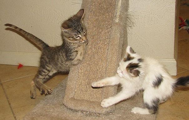 14095616971165 mercury two legged kitten 5 Handicapped yet so full of life. This kitten will definitely inspire you!!