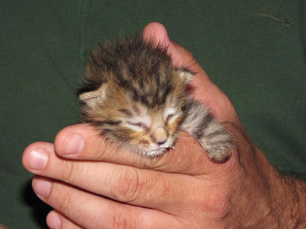 14095616977752 mercury two legged kitten 15 Handicapped yet so full of life. This kitten will definitely inspire you!!