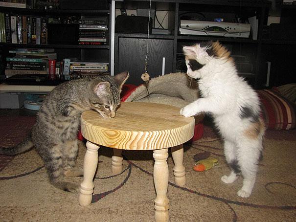 14095616977798 mercury two legged kitten 21 Handicapped yet so full of life. This kitten will definitely inspire you!!