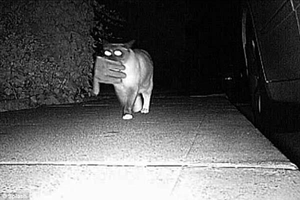 14154780617920 desktop 1406688951 Neighbors Kept Getting Items Stolen Until They Caught The Weird Culprit: A Cat.