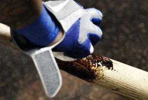 151081913 303x204 What is Pine Tar & What is it used for (in addition to Baseball)?