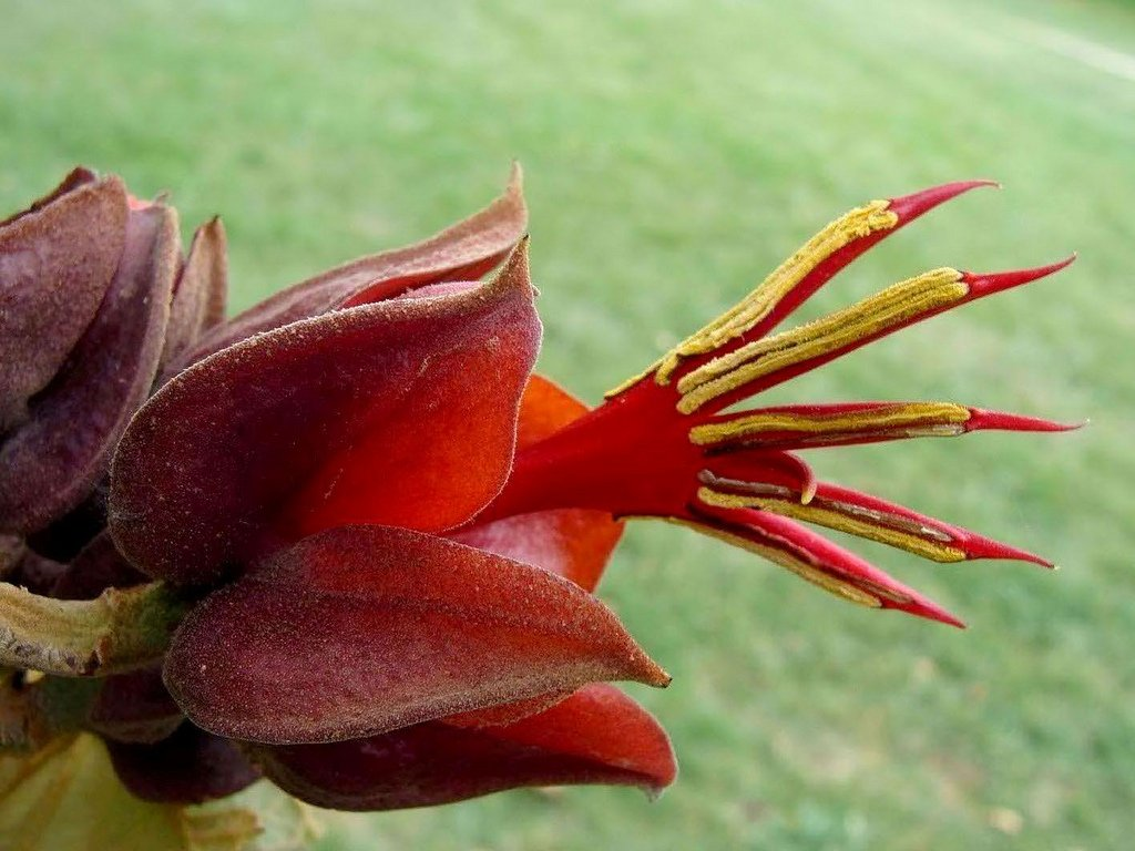 15 most bizarre flowers from around the world 15 10 Flowers That You Wont Believe Exist