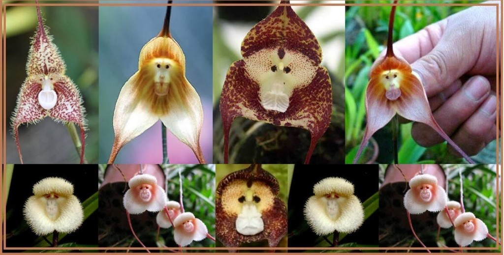 15 most bizarre flowers from around the world 9 10 Flowers That You Wont Believe Exist