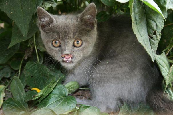 20142109175259  605 20 Of The Most Popular Internet Cat Stars