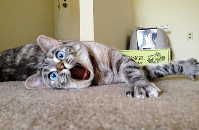 Always Curious And Surprised Looking Cat Named Nala2 20 Of The Most Popular Internet Cat Stars