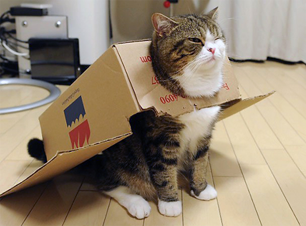 famous internet cats 221 20 Of The Most Popular Internet Cat Stars