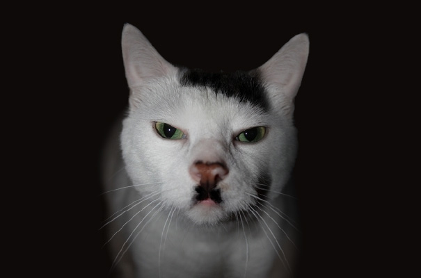 kitler 1  605 20 Of The Most Popular Internet Cat Stars