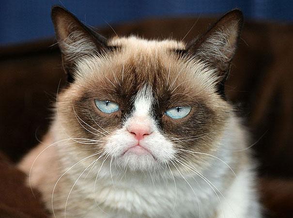 most popular cats grumpy cat 4 20 Of The Most Popular Internet Cat Stars