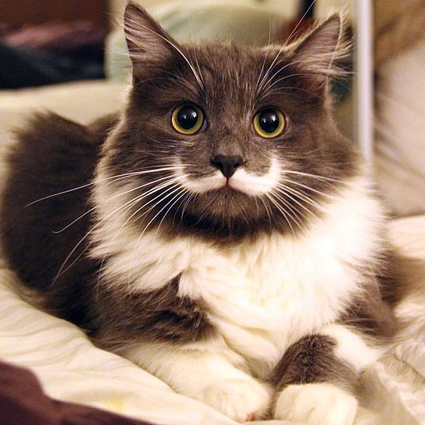 most popular cats hamilton 11  605 20 Of The Most Popular Internet Cat Stars
