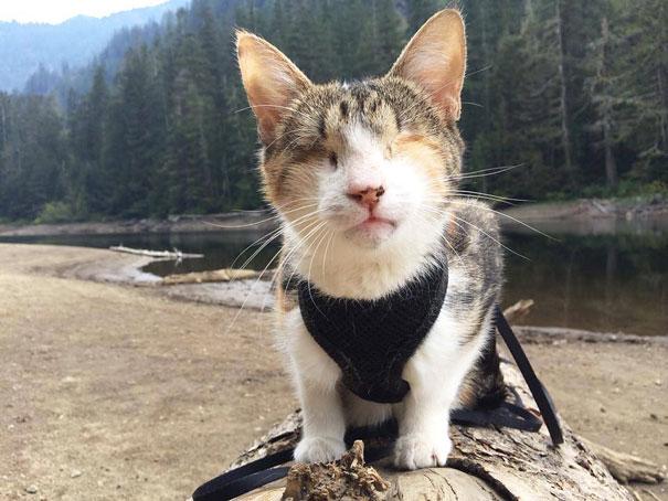 most popular cats honey bee  605 20 Of The Most Popular Internet Cat Stars