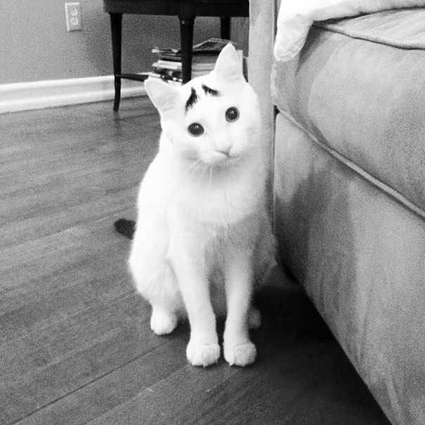 most popular cats sam has eyebrows 2 20 Of The Most Popular Internet Cat Stars