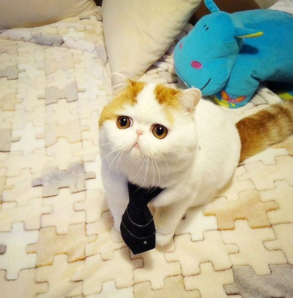 most popular cats snoopy 11  605 20 Of The Most Popular Internet Cat Stars