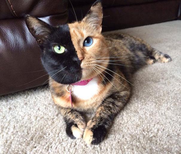 most popular cats venus 1  605 20 Of The Most Popular Internet Cat Stars