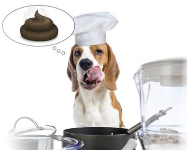 Why do dogs eat poop