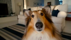 Are dogs smarter than humans 303x170 Are dogs smarter than humans?