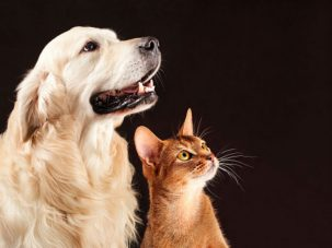 why does my cat lick my dog 303x227 Why does my cat lick my dog?