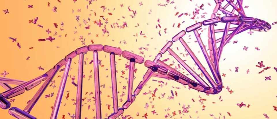 How long does DNA last How long does DNA last?