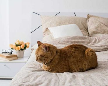 Why do cats sleep at the foot of the bed