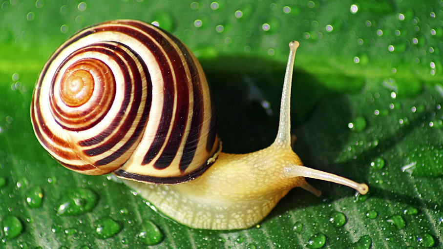 Are snails born with shells Are snails born with shells?