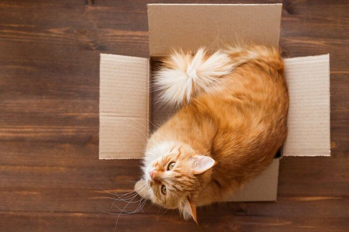 Why do cats like boxes Why do cats like boxes? Six Reasons!